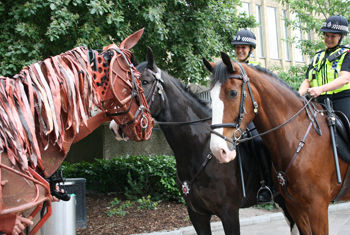 JOEY, THE LIFE-SIZE HORSE PUPPET, VISITS BRADFORD TO OFFICIALLY LAUNCH THE ALHAMBRA THEATRE RUN OF WAR HORSE
