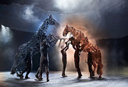 Photo for War Horse