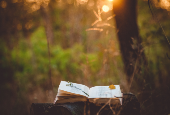 Open book in woodland